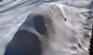 NEMPA Winter Vehicle